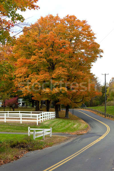Vibrant Fall Foliage Maple Tree Stock photo © ArenaCreative