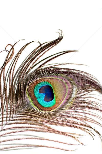 Paon plumes belle isolé blanche design Photo stock © ArenaCreative
