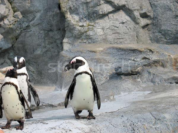 3 cute penguins Stock photo © ArenaCreative