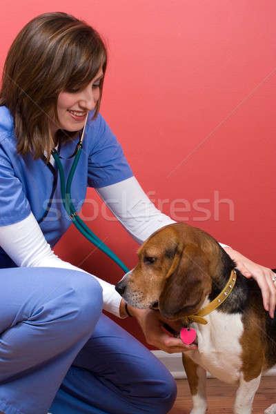Sick Dog at the Vet Stock photo © ArenaCreative