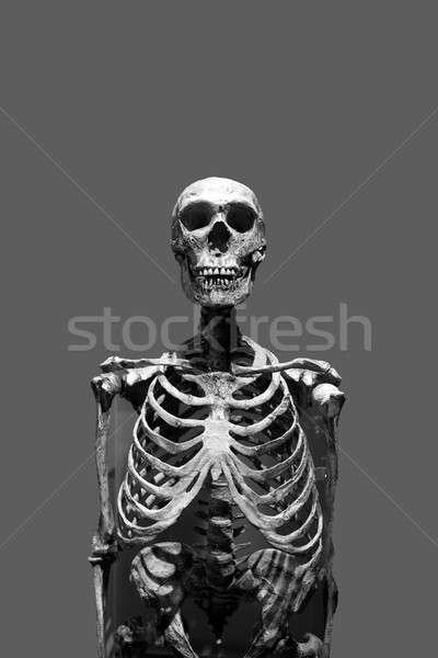 Scary Skeleton Stock photo © ArenaCreative