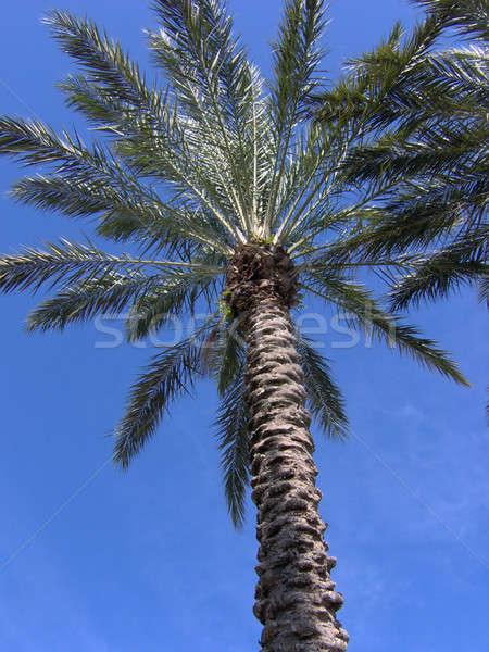 Florida palmera tropicales cielo árbol nubes Foto stock © ArenaCreative