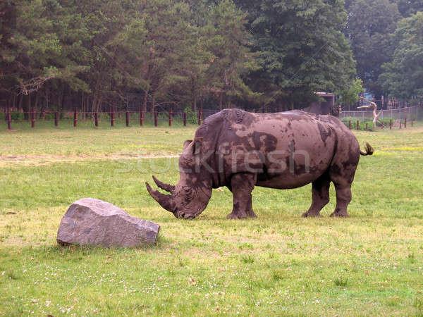 a rhino Stock photo © ArenaCreative