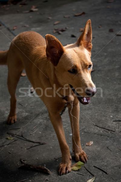 Mixed Breed Dog Stock photo © ArenaCreative