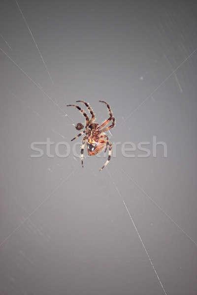 Spider Closeup Stock photo © ArenaCreative