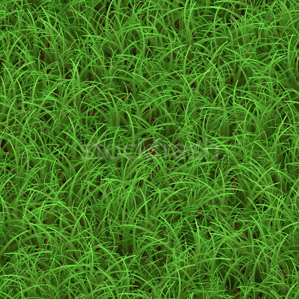 Green Grass Seamless Pattern Stock photo © arenacreative
