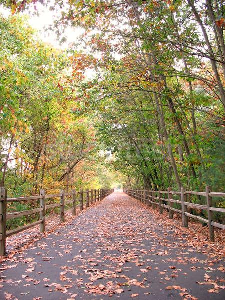ösvény közösség erdő lövés őszi szezon új Stock fotó © ArenaCreative