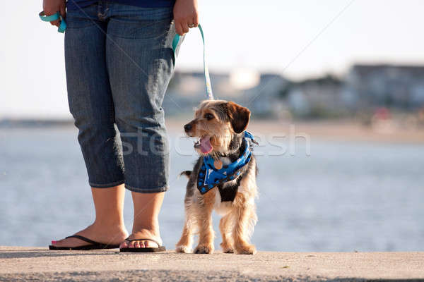 Vrouw lopen puppy cute beagle Stockfoto © ArenaCreative