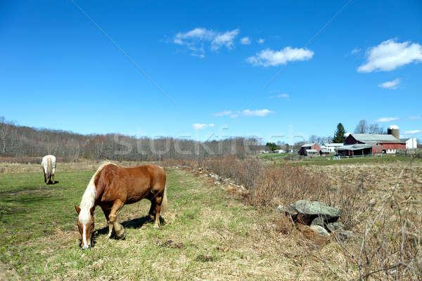 Two Horses Grazing Stock photo © ArenaCreative