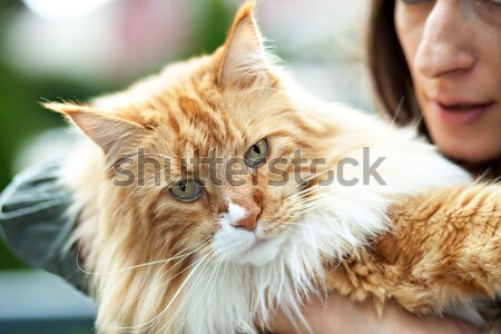 Maine Coon Cat Owner Stock photo © ArenaCreative