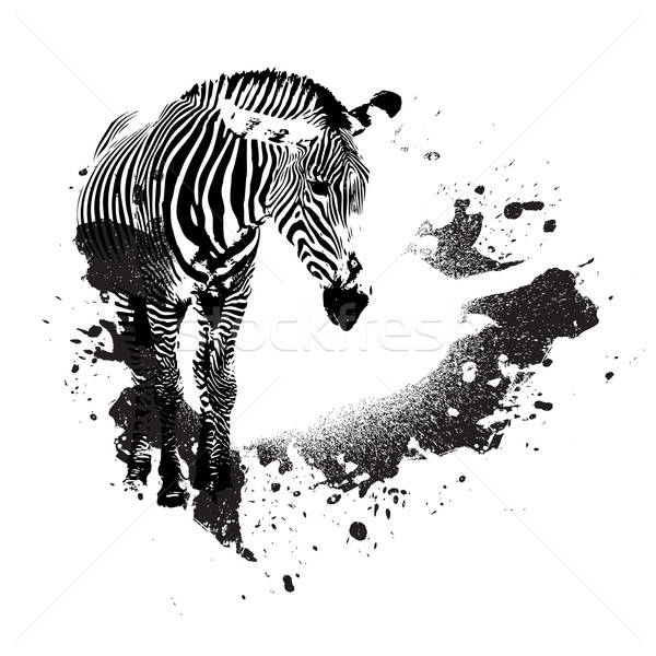 Grungy Zebra Stock photo © ArenaCreative