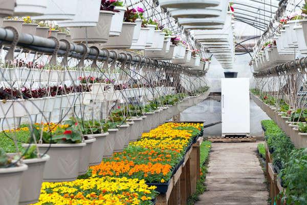 Greenhouse Nursery Flowers Stock photo © arenacreative