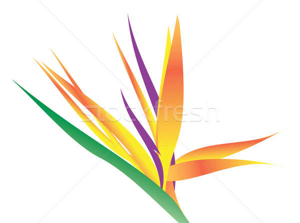 鳥 楽園 花 実例 白 春 ストックフォト © ArenaCreative