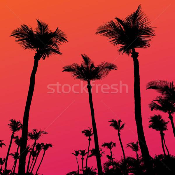 Palmiers coucher du soleil silhouette tropicales cocotier arbre Photo stock © ArenaCreative