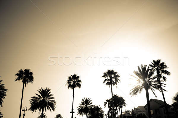 Sépia palmiers silhouette silhouettes tropicales cocotier Photo stock © ArenaCreative
