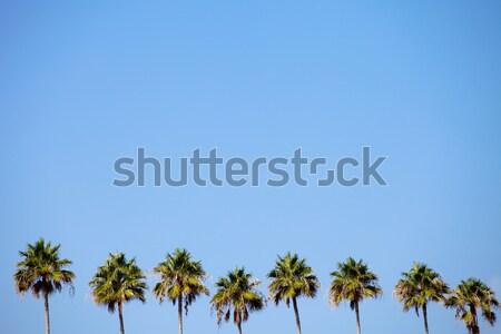 Trópusi pálmafák csetepaté kék ég negatív űr Stock fotó © ArenaCreative