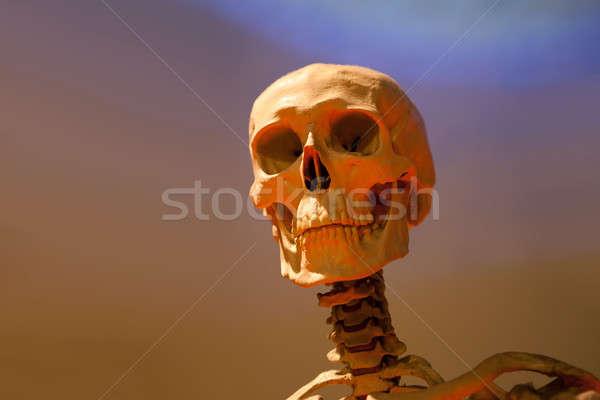 Scary Skeleton Skull Stock photo © arenacreative