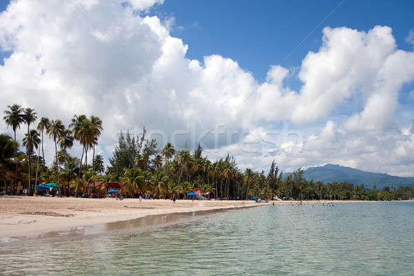 Strand Puerto Rico prachtig eiland groot Stockfoto © ArenaCreative