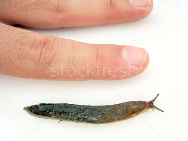 Actual Size Slug Stock photo © ArenaCreative