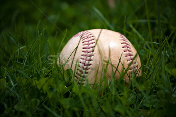 Old Baseball in the Grass Stock photo © ArenaCreative