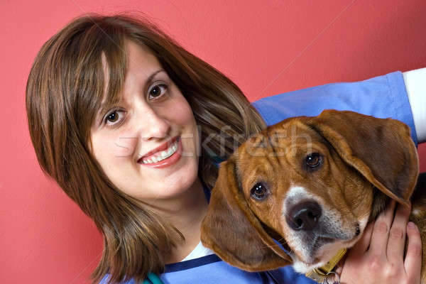 Veterinario beagle cane isolato rosso Foto d'archivio © ArenaCreative