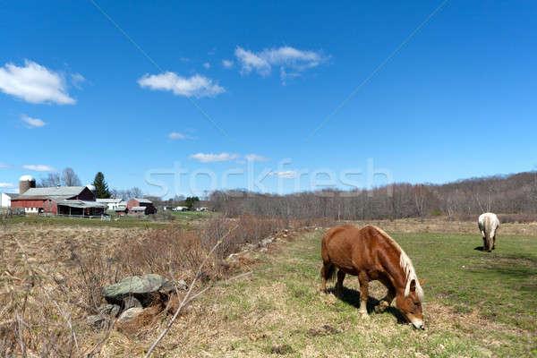 Horses Grazing in the Pasture Stock photo © arenacreative