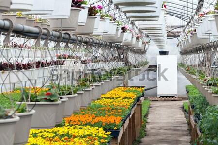 Nursery Greenhouse Interior Stock photo © ArenaCreative
