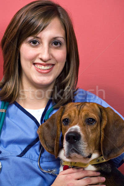 Veterinarian with a Beagle Stock photo © ArenaCreative