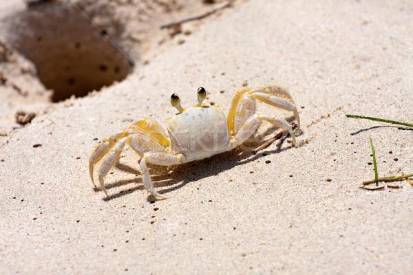 Tropical Crab Stock photo © ArenaCreative