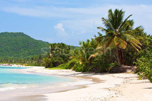 Ilha flamenco praia árvores Foto stock © ArenaCreative