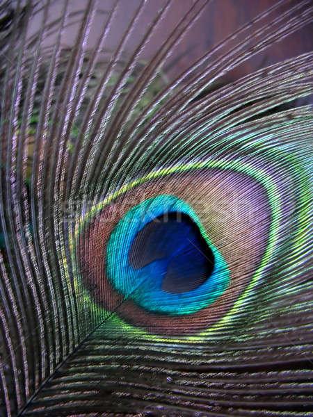 Paon plumes Nice lumière fond beauté Photo stock © ArenaCreative