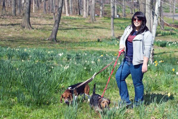 Kobieta spaceru psów młoda kobieta dwa parku Zdjęcia stock © ArenaCreative