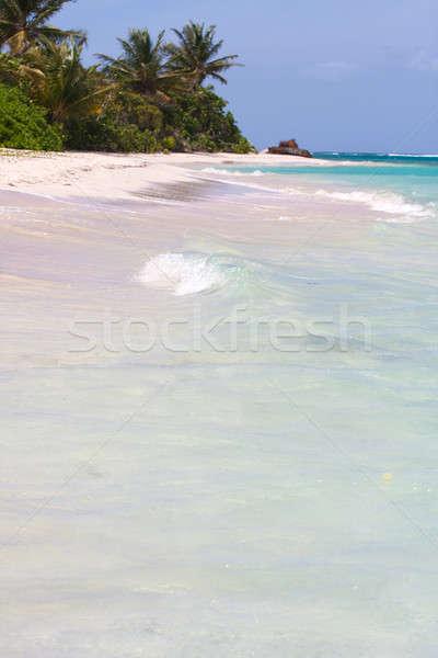 Flamenko plaj güzel beyaz ada Stok fotoğraf © ArenaCreative