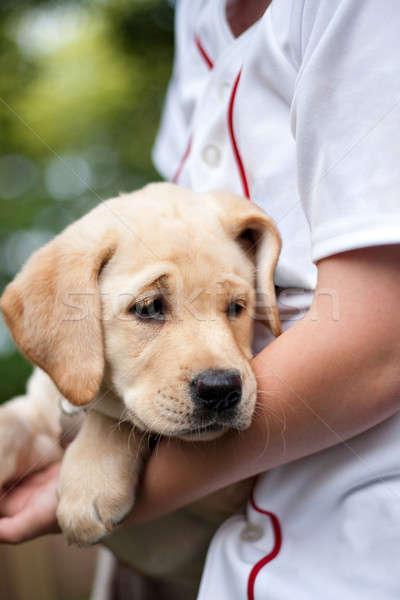 Dourado amarelo lab cachorro bonitinho Foto stock © ArenaCreative