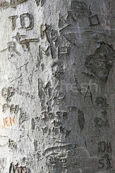 tree carvings  Stock photo © ArenaCreative