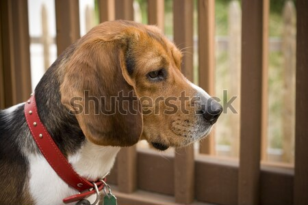 Alert Watch Dog Stock photo © ArenaCreative