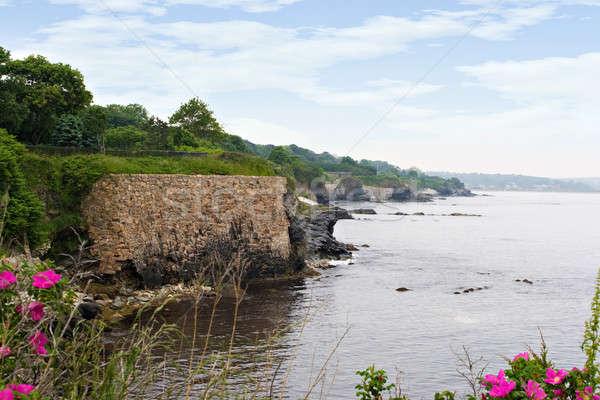 Rhode Island costa belo flores silvestres primeiro plano praia Foto stock © ArenaCreative