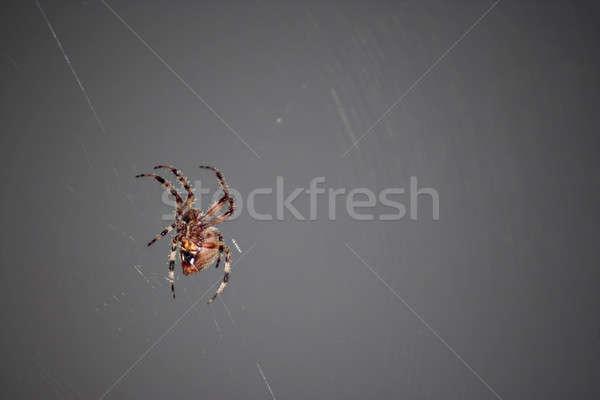 Scary Spider Stock photo © ArenaCreative
