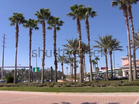 Alto palmeras tres palmas playa cielo Foto stock © ArenaCreative