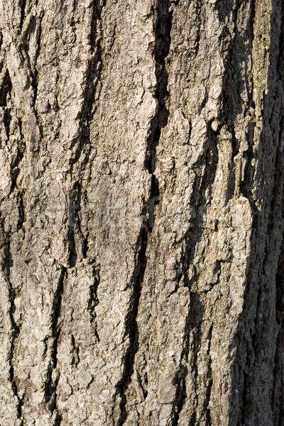 Arbre écorce texture bois forêt Photo stock © ArenaCreative