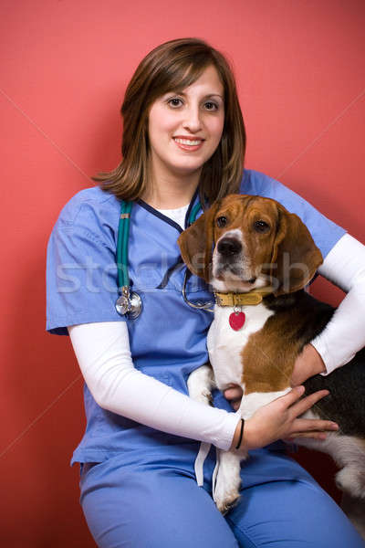 Veterinario beagle posa cane donna Foto d'archivio © ArenaCreative