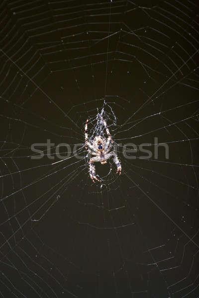 Spider Stock photo © ArenaCreative