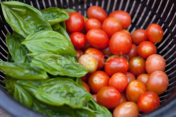 Fresh Picked Grape Tomatoes and Green Basil Stock photo © ArenaCreative