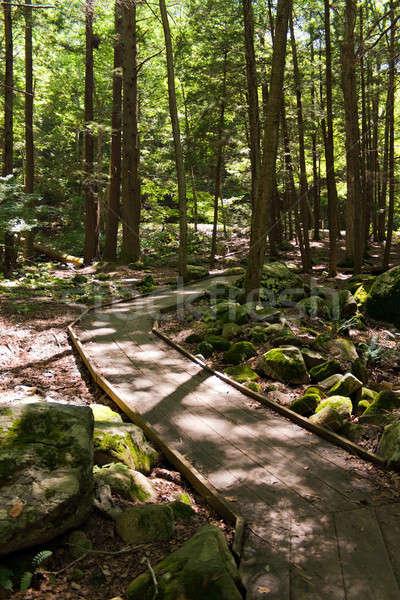 Wooded Walking Path Stock photo © ArenaCreative