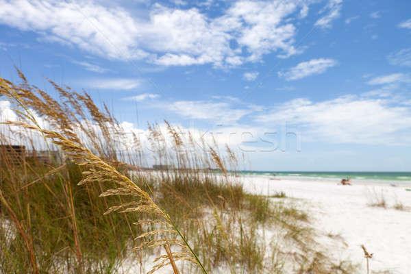 Siesta Key Beach Sarasota Florida Stock photo © ArenaCreative