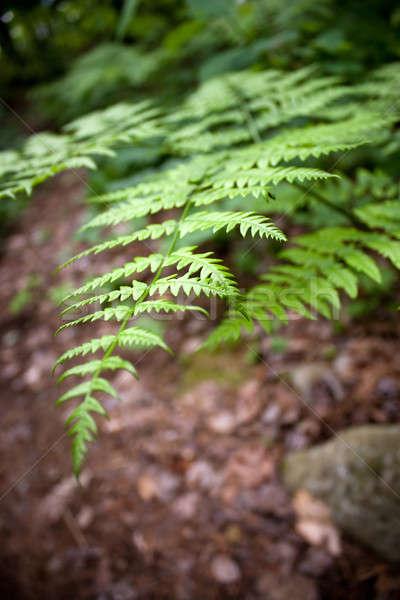 Bos varen bladeren gegroeid bos Stockfoto © ArenaCreative