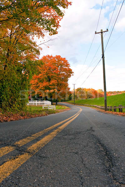 Vibrant Fall Foliage Road Stock photo © arenacreative