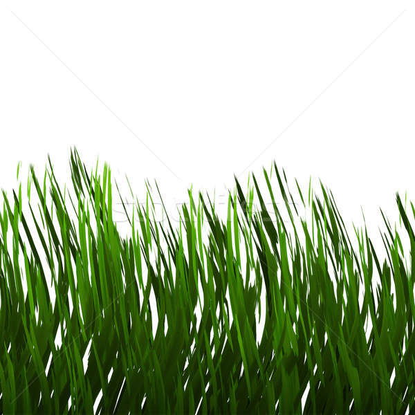 Green Grass Isolated Stock photo © ArenaCreative