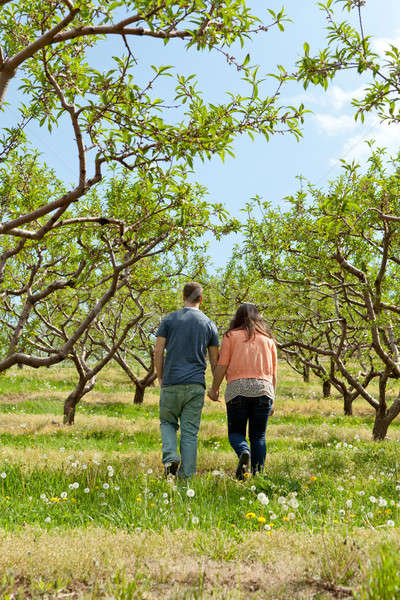 Couple Walking Through Apple Orchard Stock photo © ArenaCreative