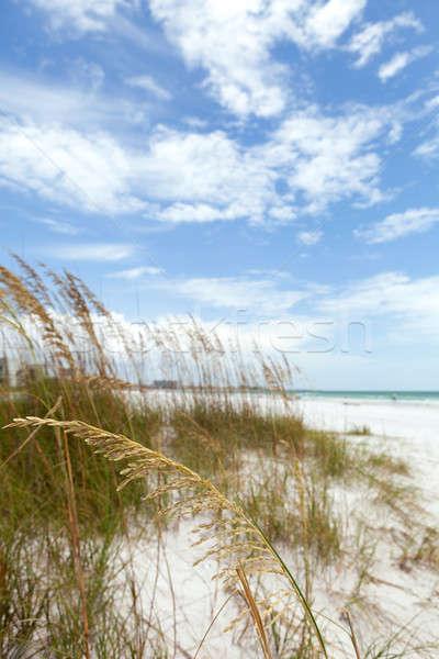 ключевые Флорида пляж побережье песок Сток-фото © ArenaCreative